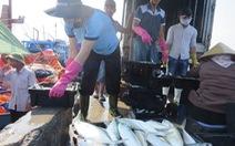 Hỗ trợ 25,8 tỉ cho cơ sở thu mua hải sản vụ cá chết