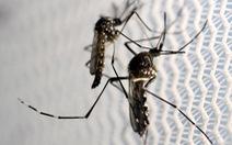 Mỹ lo muỗi lan truyền dịch Zika