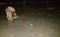 Từ đêm đến sáng sứa dày đặc bờ biển Đà Nẵng