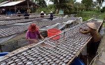 Cà Mau đăng ký đưa cá khô bổi thành thương hiệu đặc sản
