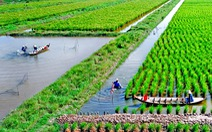 Thích ứng biến đổi khí hậu: Hoàn thiện mô hình sản xuất tôm - lúa