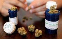 Mỹ: cần sa là ma túy nguy hiểm