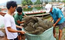 Thêm 2.000 tấn gạo cho người dân Huế bị ảnh hưởng cá chết