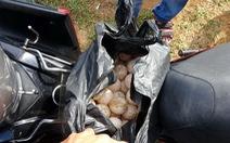 Xin ý kiến Viện KSND Tối cao về vụ trộm 116 trứng vích