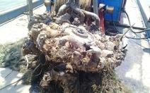 Ngư dân Nghệ An vớt được khối kim loại nặng 2 tấn