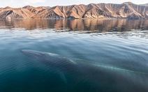 Bộ ảnh ấn tượng về cá voi, cá heo trên đại dương