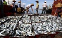 Làm sao cứu ngư trường Biển Đông?