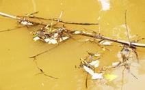 Đập thủy lợi xả nước, cá chết hàng loạt sau ba mươi phút