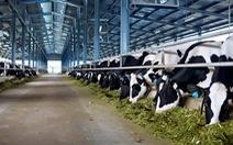 Vinamilk đầu tư nhiều trang trại bò sữa công nghệ cao