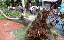 Nhiều cây xanh Huế gãy đổ do ảnh hưởng bão số 4