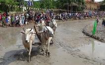 Bò chạy loạn xạ trong lễ hội, người xem hú vía