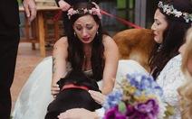 Dân mạng rớt nước mắt chú chó ráng sống dự đám cưới chủ