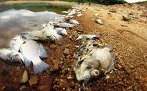 Cá chết ở hồ Phước Hà do thiếu oxy
