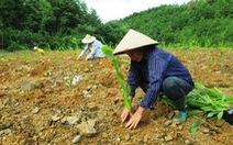 Thủ tướng ban hành một số chính sách bảo vệ, phát triển rừng