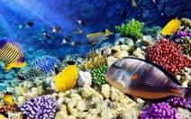 Bất ngờ về khả năng phân biệt màu sắc của các loài cá cảnh biển