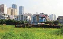 TP.HCM: Tính tiền bảo vệ, phát triển đất trồng lúa khi chuyển sang mục đích phi nông nghiệp