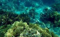 Phục hồi san hô ở vịnh Nha Trang