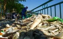 Huy động bộ đội vớt cá chết trên hồ Tây