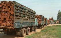 Việt Nam giảm nhập khẩu gỗ quý