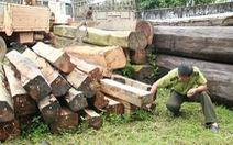 """Mật phục bắt giữ hai xe gỗ """"khủng"""" ở Đắk Lắk"""