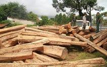 Bộ đội biên phòng nổ súng bắt 5 xe chở gỗ lậu