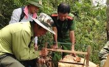 Khởi tố vụ án khai thác gỗ pơmu ở Pù Hoạt