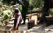 Phá án vụ phá rừng hơn 100m3 gỗ, bắt ba lâm tặc