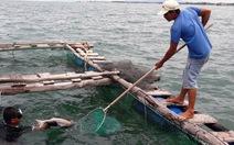 Vụ cá bớp chết tại Kê Gà: công bố kết quả mẫu nước