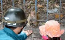 Dời đàn khỉ trong Tòa thánh Tây Ninh về vườn quốc gia