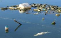 Cá hồ Linh Đàm chết do thay đổi thời tiết