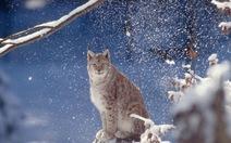 Động vật hoang dã giảm hơn phân nửa trong 40 năm