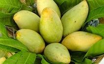Xoài - siêu thực phẩm ngăn ngừa bệnh béo phì