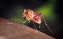 Phát hiện gen khiến ký sinh trùng sốt rét kháng thuốc tại Campuchia