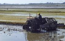 Sẽ miễn lệ phí trước bạ cho đất sản xuất nông nghiệp