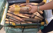 Tiêu hủy trên 2 tấn ngà voi, 70kg sừng tê giác nhập lậu