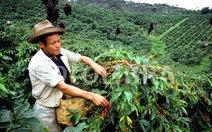 Colombia dạy người dân làm thực phẩm sạch