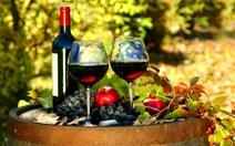 Uống rượu vang giúp chống được nhiễm trùng máu