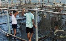 Cá nuôi chết ở đầm Cầu Hai không phải do ô nhiễm