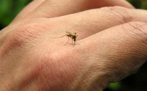 Ngày nào TP.HCM cũng có người nhiễm virut Zika mới