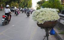 Xao xuyến sắc trắng tinh khôi của mùa cúc họa mi Hà Nội