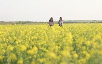 Giới trẻ đắm mình vào cánh đồng hoa cải phủ vàng