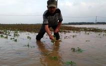 Quảng Nam thiệt hại mưa lũ khoảng 220 tỉ đồng