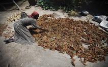FAO: 39 quốc gia đối mặt thiếu lương thực trầm trọng