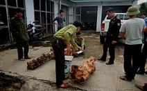 Bắt nhiều vụ vận chuyển trái phép gỗ giáng hương