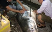 """Ngư dân bắt cá tra dầu """"khủng"""" 230kg bán ở Long Xuyên"""