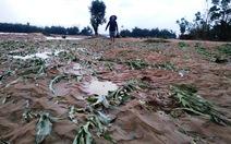 Quảng Nam chi khẩn cấp 5 tỉ đồng hỗ trợ thiệt hại lũ lụt