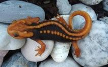 Tìm thấy rắn đầu bảy sắc, thằn lằn giống rồng ở Mê Kông