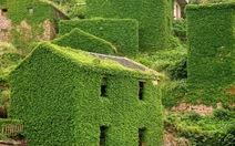 Cây cỏ phủ kín một 'thị trấn ma'