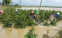 Bộ NN&PTNT kiểm tra thiệt hại về nông nghiệp