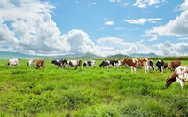 VN sản xuất sữa tươi organic